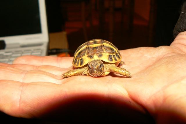 Ma tortue (pour le plaisir des critiques de Génia !!) Tortue11