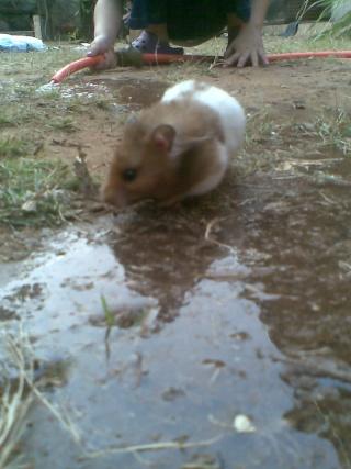 Mis hamsters Patric18