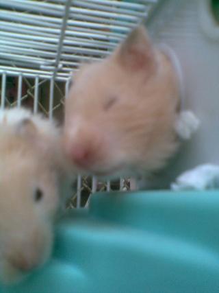 Mis hamsters Patric19