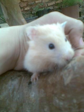 Mis hamsters Patric20