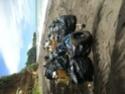 Nettoyage de plage - Page 3 Img_1111