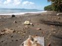 Nettoyage de plage P9130012