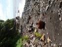 Nettoyage de plage P9130013