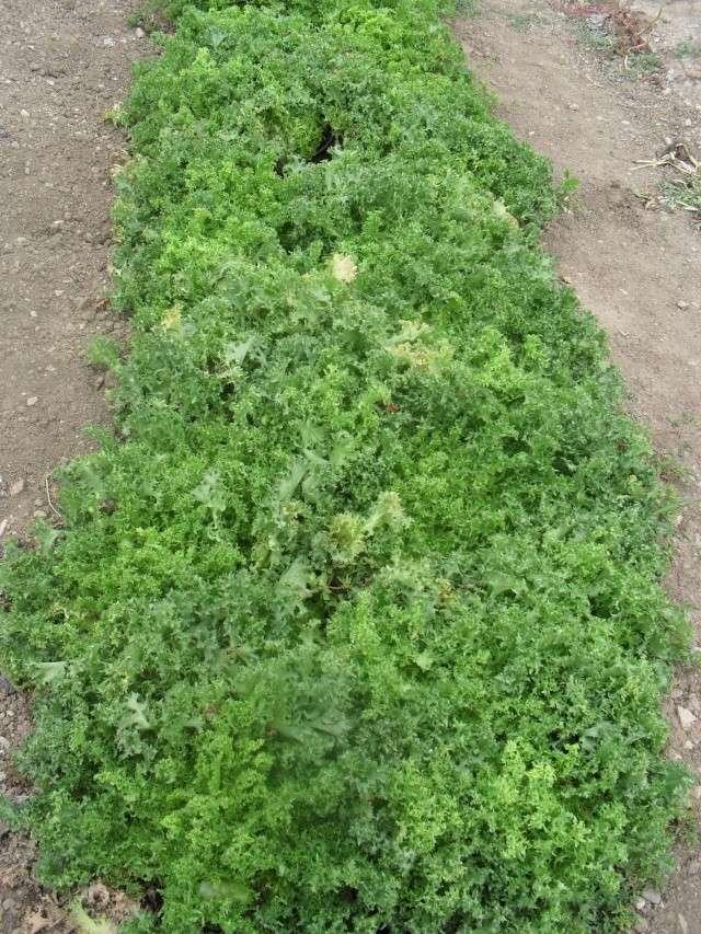 mes legumes 01910