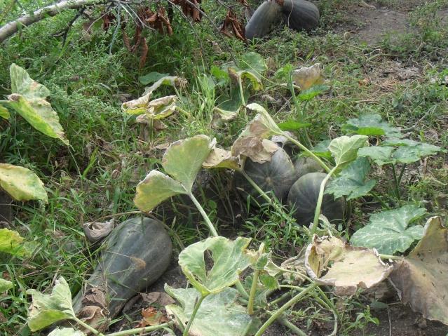 mes legumes 03712