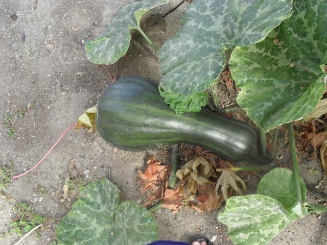 mes legumes 04012