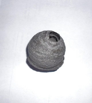 un cocon 09811