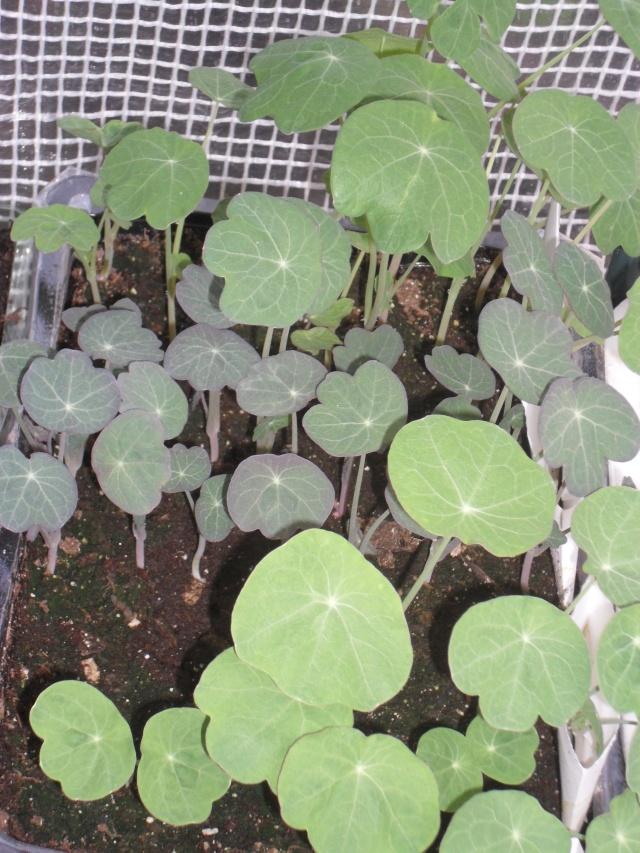 mes legumes S10