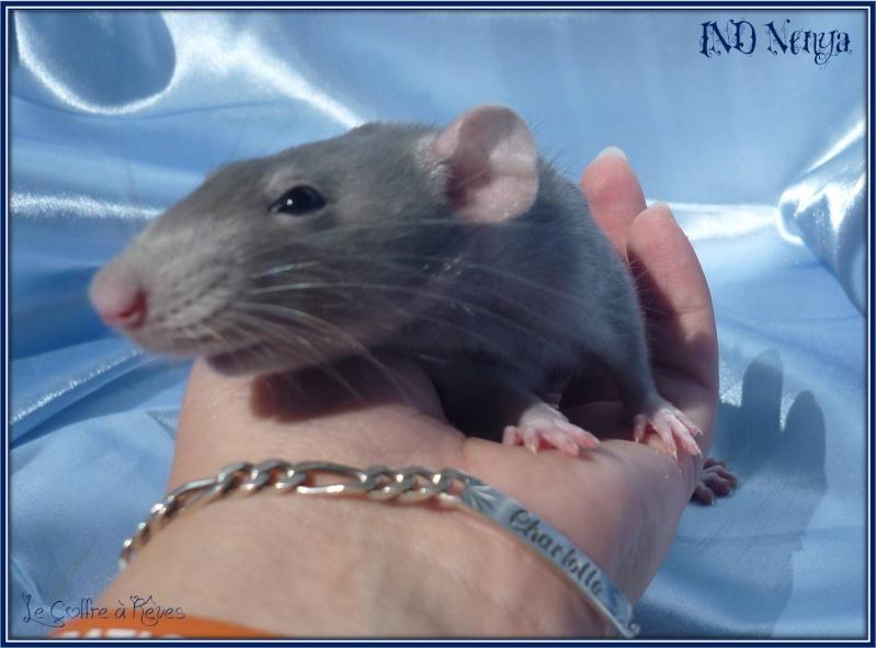DMR Crunch xXx IND Nenya 2011_025