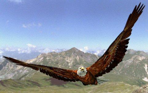 L'aigle et le rêveur Arton110