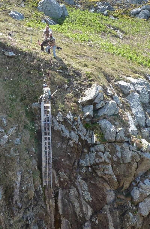Suivi 2011 du Crave à bec rouge (Pyrrhocorax pyrrhocorax) en Bretagne P1000424