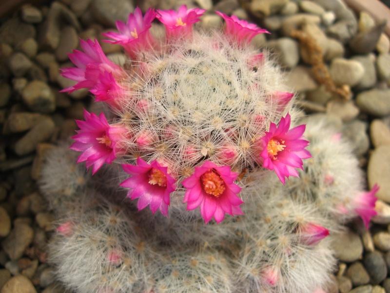 My favorite thing Cacti_10