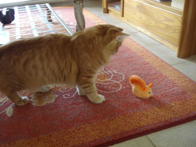 Les jouets de nos chats - Page 2 Acureu10