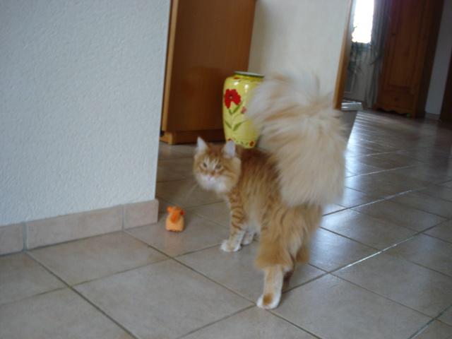 Les jouets de nos chats - Page 2 Acureu11