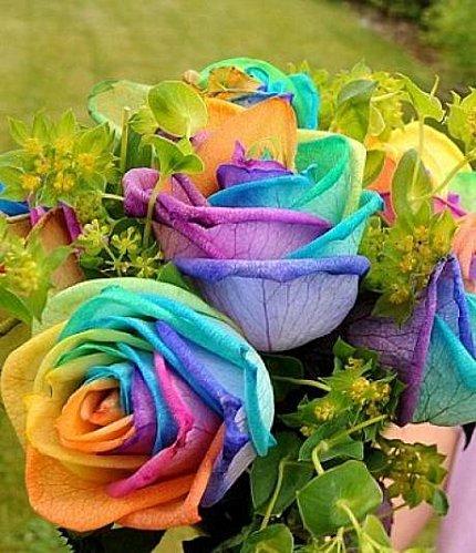 Jeu du multicolore - Page 2 Rose-a10