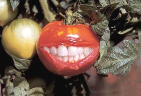 Images fruits et légumes en délires  Rts_hu10