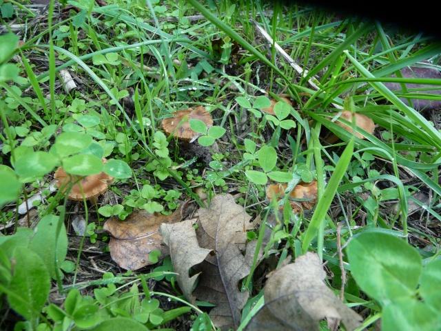 autres champignons sans nom... P1110314
