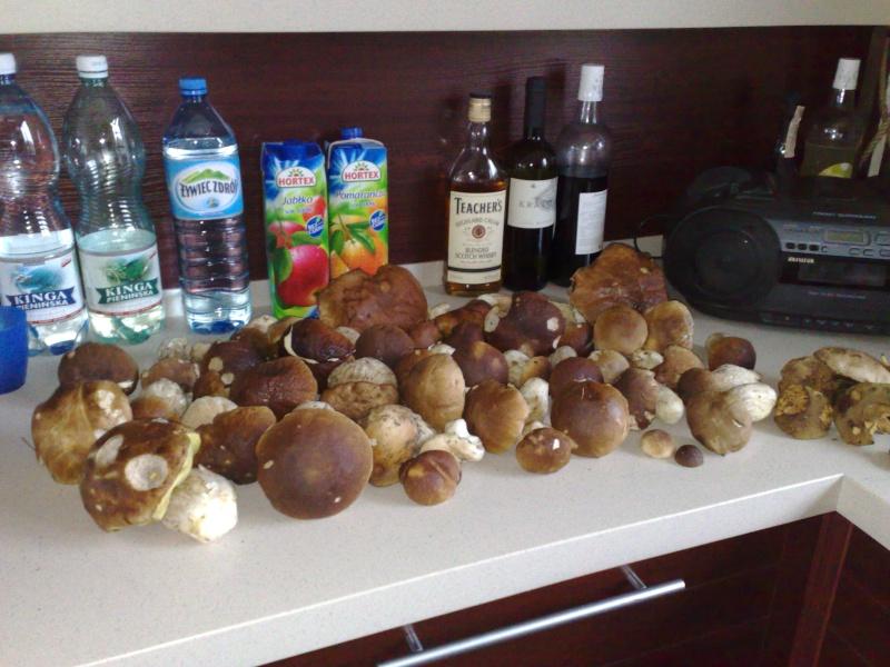 Funghi in Austria - Pagina 2 08092011