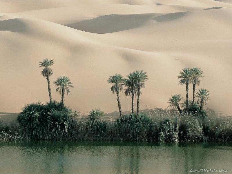 Lugar: Oasis Ph-11610