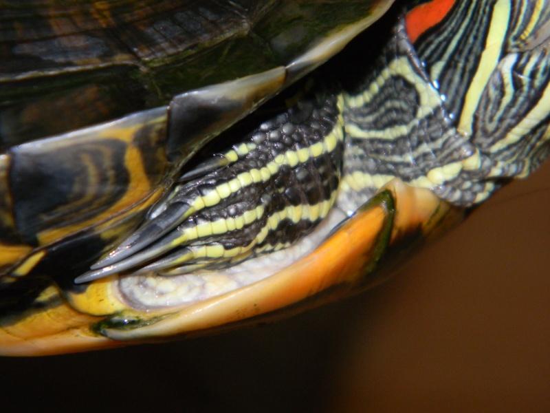 Encore une nouvelle tortue... 02211