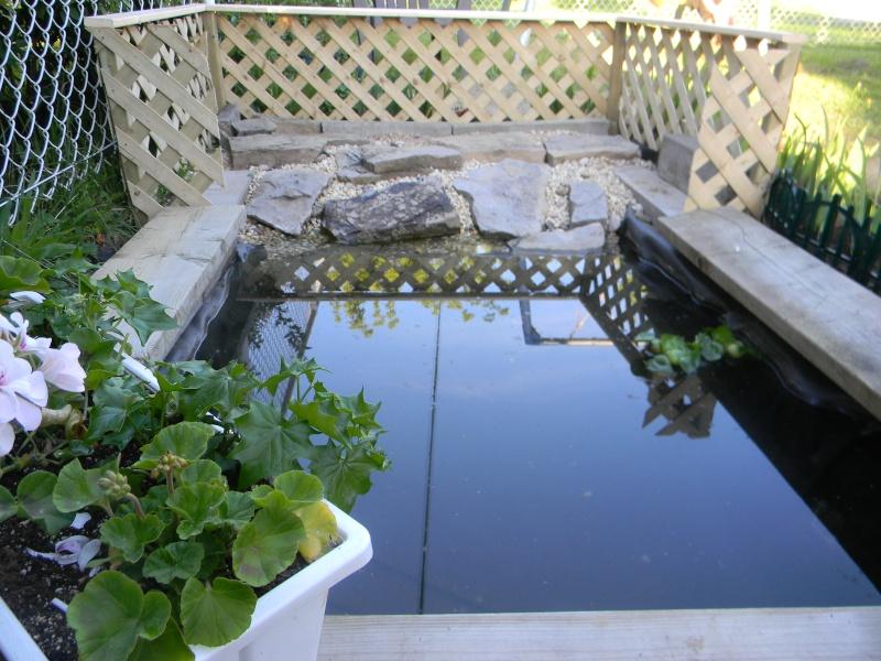 Un bassin enfin!!! - Page 3 03315