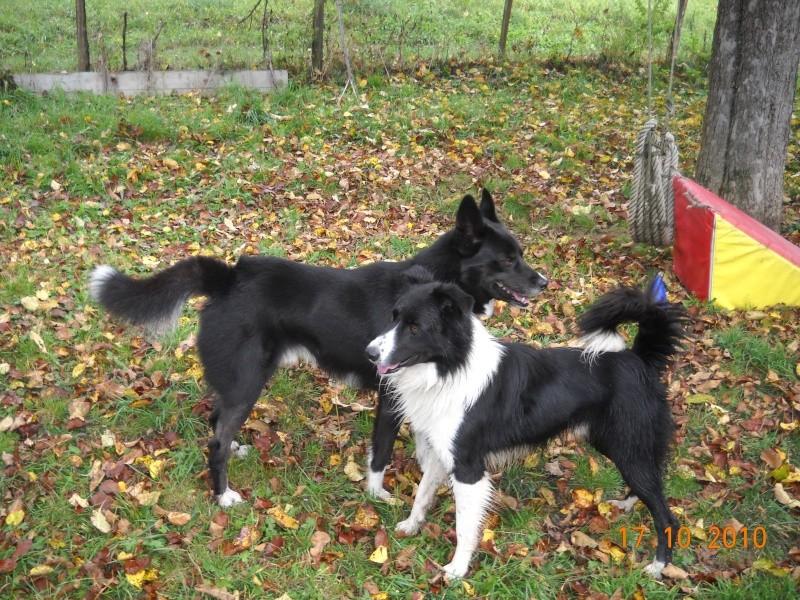 Nos loups grandissent, postez nous vos photos - Page 5 Dscn3810