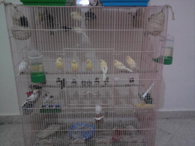 une image de mes canaris  Photo011