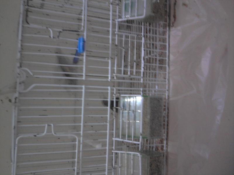 une image de mes canaris  Photo015