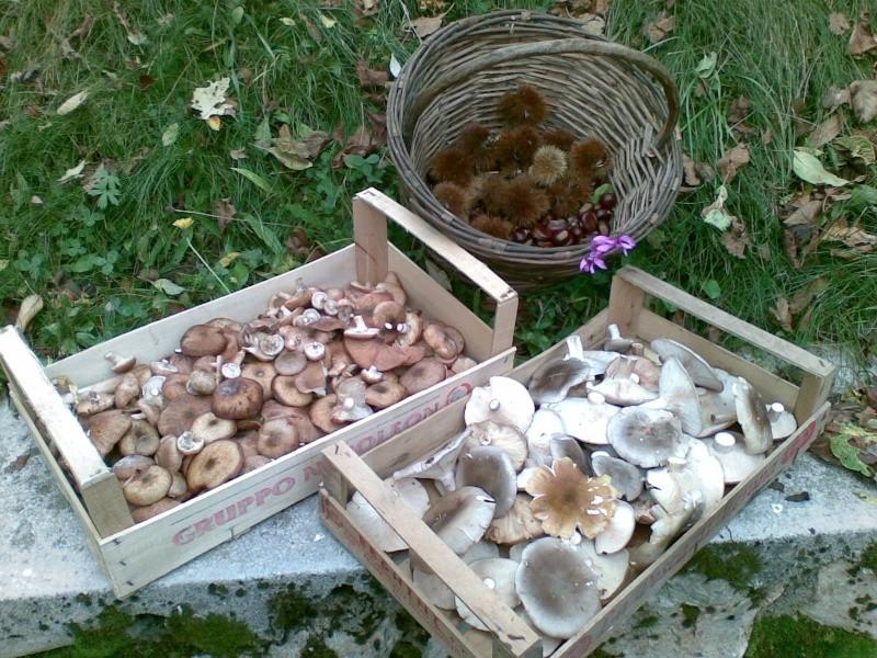 Funghi in Austria - Pagina 3 24102015