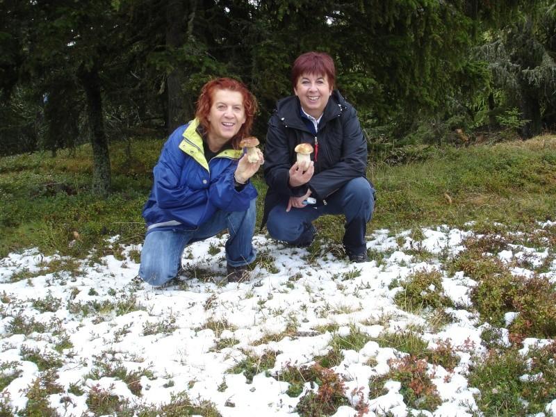 Funghi in Austria - Pagina 3 Funghi13