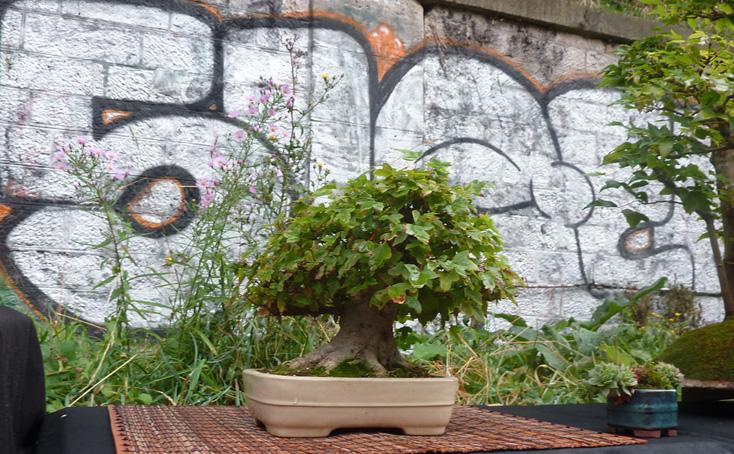 Urban bonsaïs P1010712