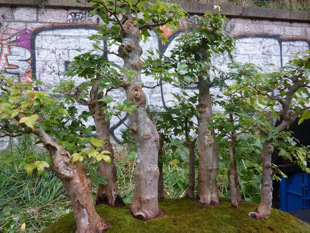 Urban bonsaïs P1010713