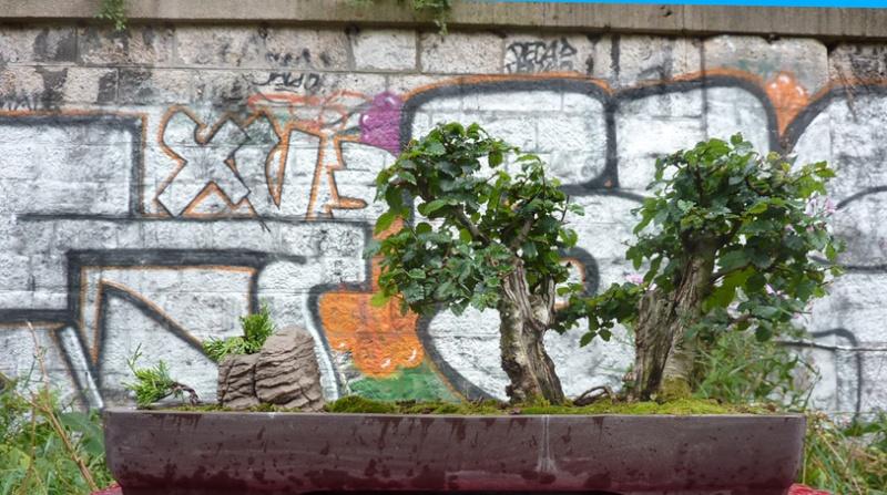 Urban bonsaïs P1010714