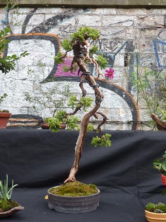 Urban bonsaïs P1010717