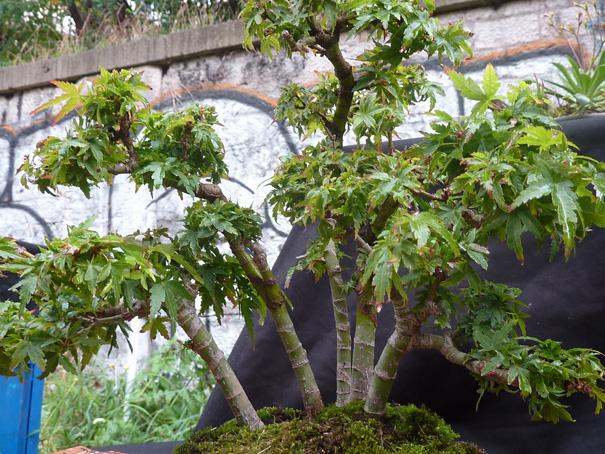 Urban bonsaïs P1010810
