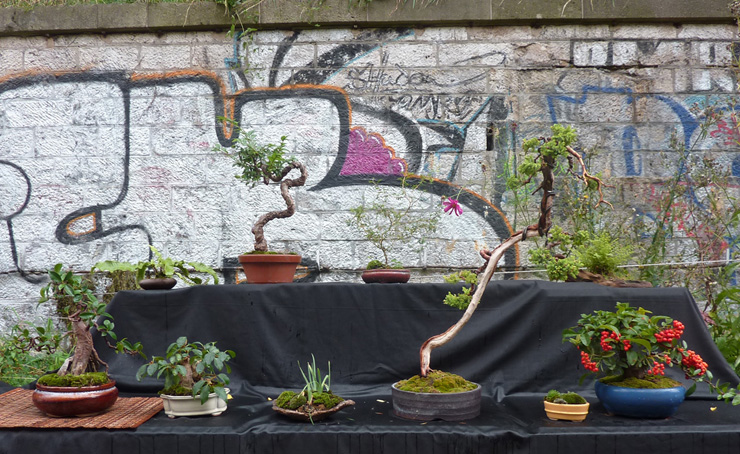 Urban bonsaïs P1010811