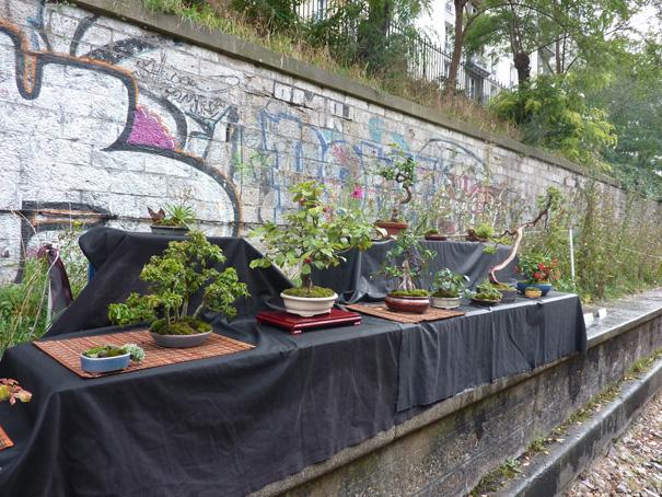 Urban bonsaïs P1010812