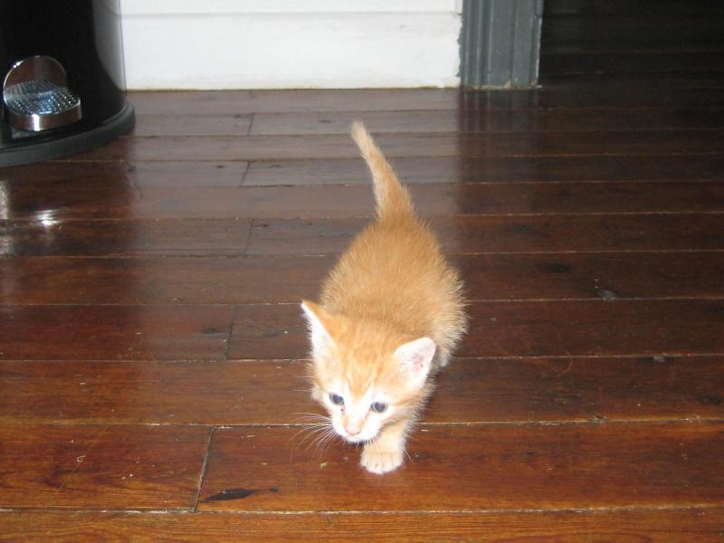 HELP!!!!!!! chaton à placer!!! Eva adoptée par les Granges de Marsal!!!!! - Page 2 Img_2410