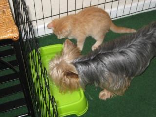 HELP!!!!!!! chaton à placer!!! Eva adoptée par les Granges de Marsal!!!!! - Page 5 Img_2611