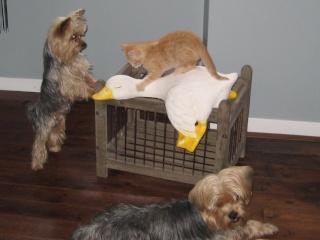 HELP!!!!!!! chaton à placer!!! Eva adoptée par les Granges de Marsal!!!!! - Page 5 Img_2612