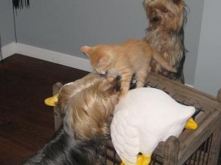 HELP!!!!!!! chaton à placer!!! Eva adoptée par les Granges de Marsal!!!!! - Page 5 Img_2613