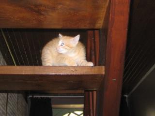 HELP!!!!!!! chaton à placer!!! Eva adoptée par les Granges de Marsal!!!!! - Page 5 Img_2614