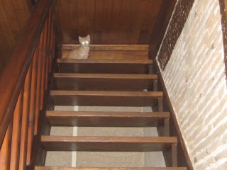 HELP!!!!!!! chaton à placer!!! Eva adoptée par les Granges de Marsal!!!!! - Page 5 Img_2615