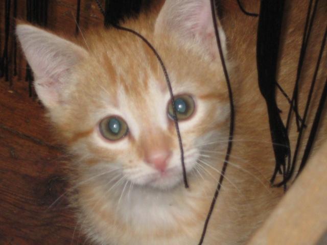 HELP!!!!!!! chaton à placer!!! Eva adoptée par les Granges de Marsal!!!!! - Page 5 Img_2618
