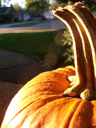 Assignment 10: photo scavenger hunt TANGIBLE due Oct 4 Pumpki10