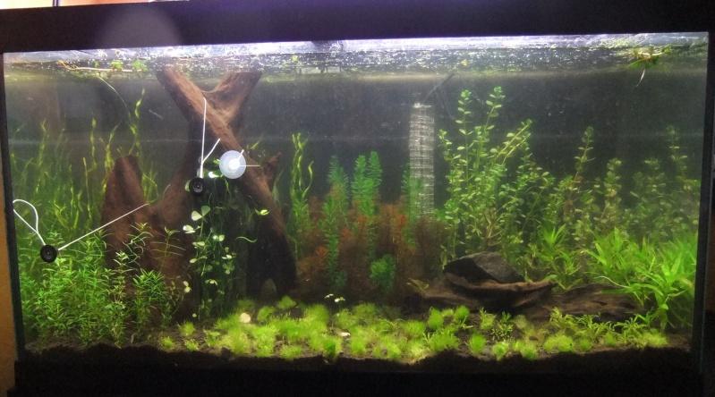 Mes aquariums : Dscf1510
