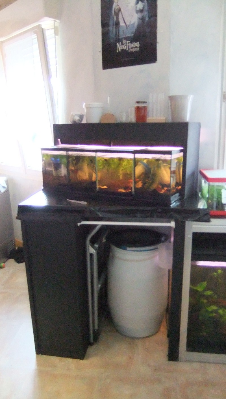 Ma mini-Fishroom Dscf1620