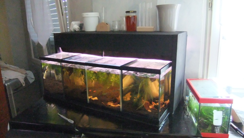 Ma mini-Fishroom Dscf1621