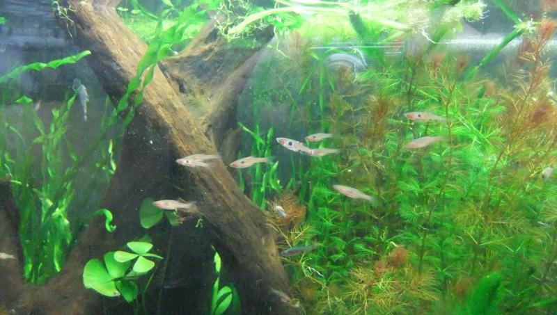Mes aquariums : - Page 3 Dscf1718