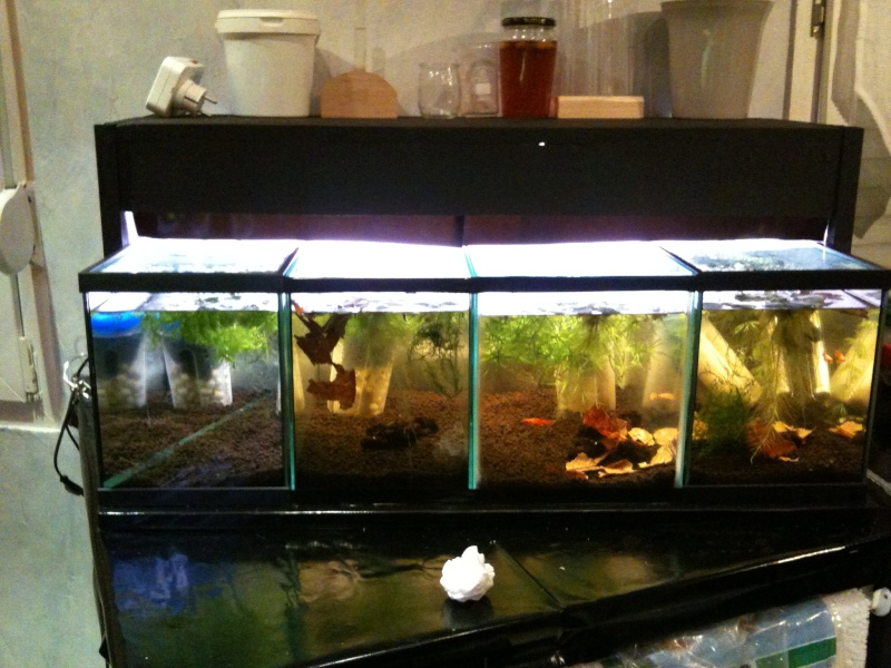 Ma mini-Fishroom Img_0312
